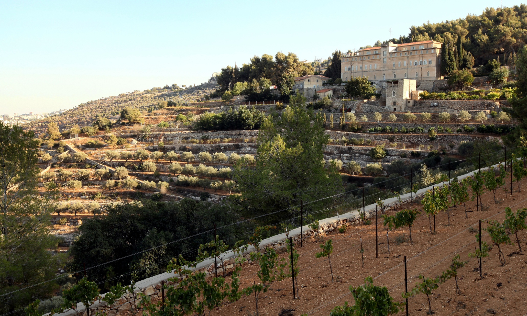CE5PNT Vineyard of the Cremisan Winery operated and managed by the Salesian Don Bosco Congregation. Beit Jala near Bethlehem, Palestine