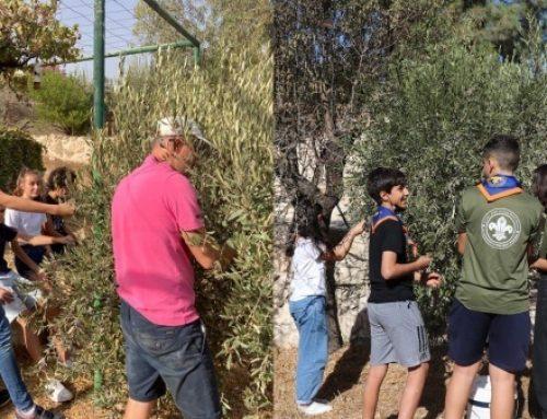 Olive picking campaign at Emmanuel Monastery in Bethlehem.